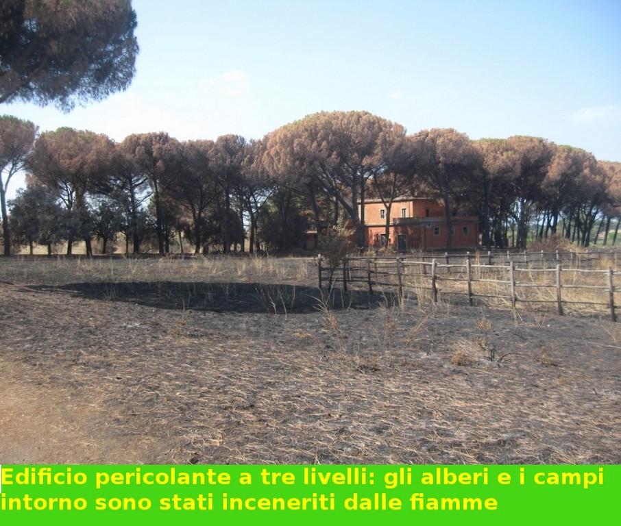 Pineta e campi intorno all'edificio abbandonato