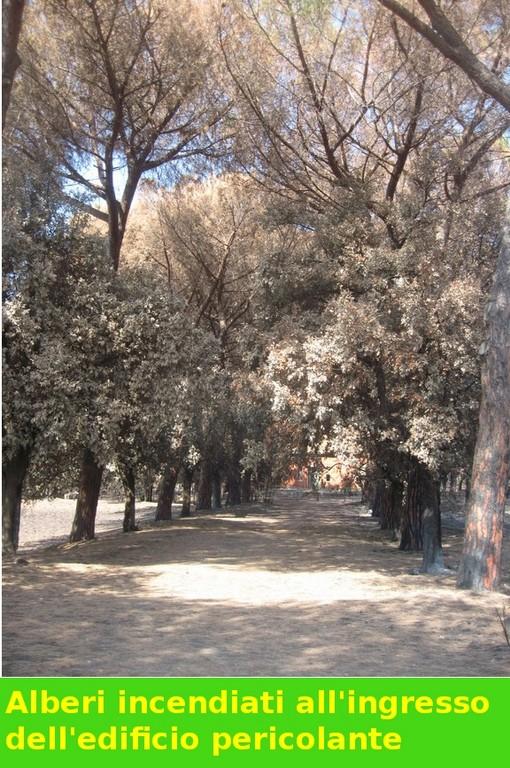 Pineta e alberi sulla strada per l'edificio abbandonato