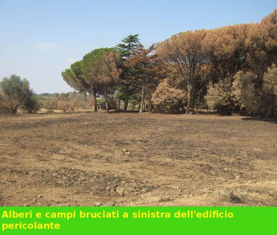 Pineta e altri alberi vicino edificio abbandonato