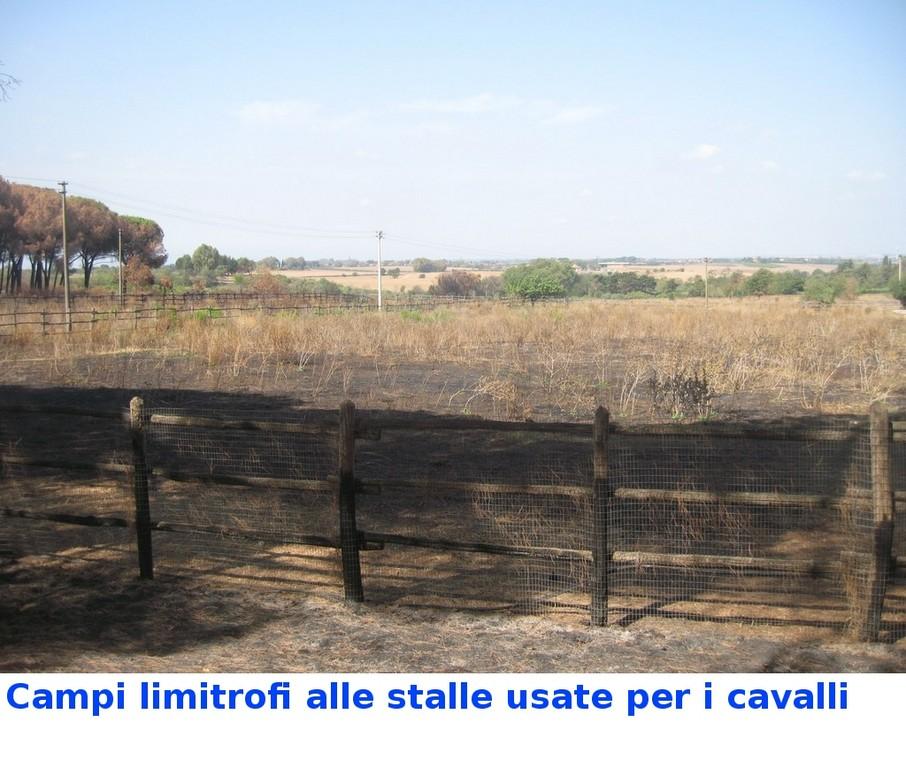 Campi vicino alle stalle dei cavalli